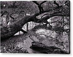 Fallen Tree Acrylic Print by Dariusz Gudowicz