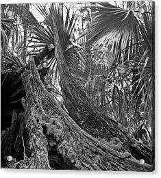 Fallen Tree. Highlands Hammock S.p. Acrylic Print