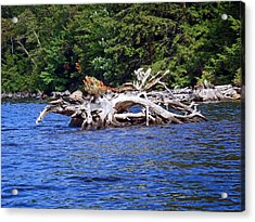 Fallen Tree In A Lake Acrylic Print