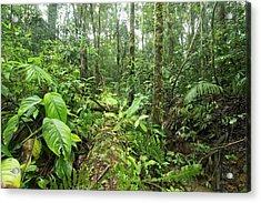 Fallen Tree In Rainforest Acrylic Print by Dr Morley Read