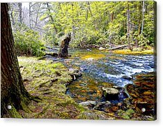 Fallen Tree In Stream Pocono Mountains Acrylic Print