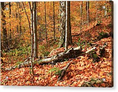 Acrylic Print featuring the photograph Fallen Trees by Alicia Knust