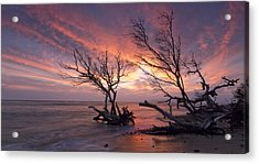 Fallen Trees Acrylic Print by James Roemmling