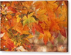 Falling Colors I Acrylic Print