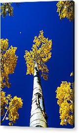 Falling Leaf Acrylic Print