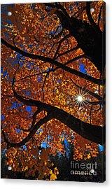 Falling Star Acrylic Print