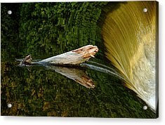 Acrylic Print featuring the photograph Falling Tree Reflections by Debbie Oppermann