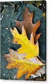 Falls Carpet Acrylic Print by JAMART Photography
