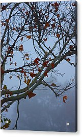 Acrylic Print featuring the photograph Fall's Final Colors by Richard Stephen