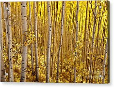 Fall's Golden Light Acrylic Print by Steven Reed