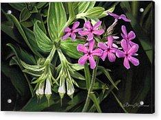 False Gromwell With Prairie Phlox Acrylic Print