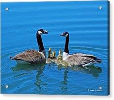 Family Canada Geese Acrylic Print by Jonathan Whichard