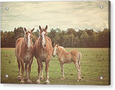 Family Acrylic Print by Carrie Ann Grippo-Pike