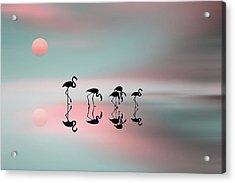 Family Flamingos Acrylic Print by Natalia Baras