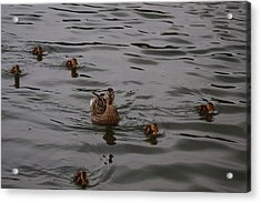Acrylic Print featuring the photograph Family Is Everything by Vadim Levin