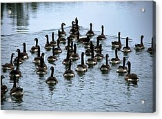 Family Of Geese Acrylic Print by Linda Segerson