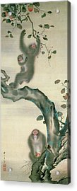 Family Of Monkeys In A Tree Acrylic Print by Japanese School