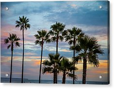 Family Of Palms Acrylic Print