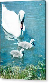 Family Of Swans At The Market Common Acrylic Print by Vizual Studio