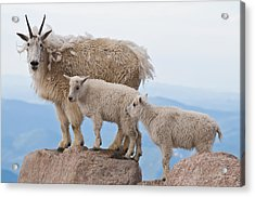 Family Photo Time Acrylic Print by Mike Berenson
