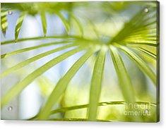 Fan Palm Fronds Acrylic Print by Charmian Vistaunet