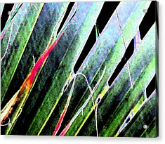 Fan Palm On Wet Day Acrylic Print