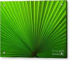 Fan Palm Acrylic Print by Ranjini Kandasamy