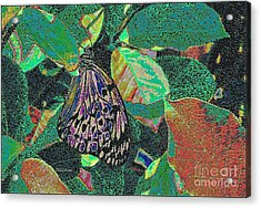 Acrylic Print featuring the photograph Fanciful by Kathie Chicoine