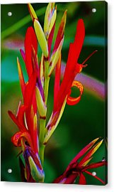 Fancy Bloom Acrylic Print