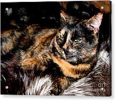 Fancy Cat Acrylic Print