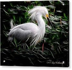 Fancy Feathers Acrylic Print