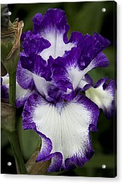 Fancy Iris Acrylic Print by Michael Friedman