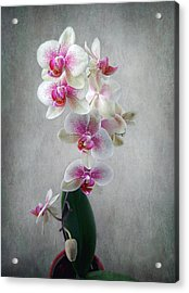 Fancy Orchids Acrylic Print by Louise Kumpf