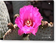 Acrylic Print featuring the photograph Fanfare Fuchsia  by Cathy Dee Janes