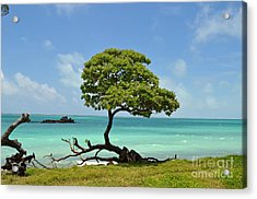 Fanning Tree On Beach Acrylic Print by Eva Kaufman