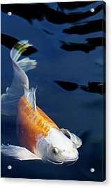 Fantail Girl Acrylic Print by Rebecca Cozart