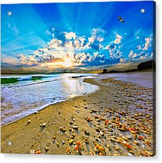 Acrylic Print featuring the photograph Fantasy Art-birds Flying Into Sunset Over Shell Covered Beach by Eszra