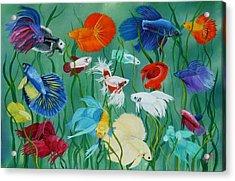 Fantasy Bettas Acrylic Print by Debbie LaFrance