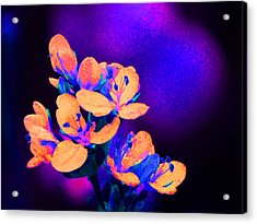 Fantasy Flowers 13 Acrylic Print by Margaret Saheed