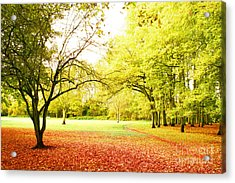 Acrylic Print featuring the photograph Fantasy Forest by Boon Mee