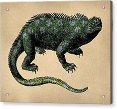 Fantasy Iguana Vintage Illustration Acrylic Print by Flo Karp