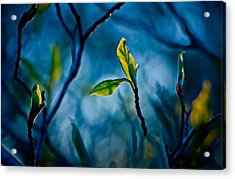 Fantasy In Blue Acrylic Print by Linda Unger