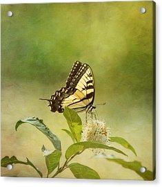 Fantasy Acrylic Print by Kim Hojnacki