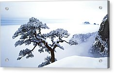 Fare-well Pine Tree Acrylic Print by King Wu
