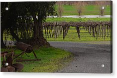 Farm And Vineyard Acrylic Print