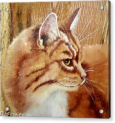 Farm Cat On Rustic Wood Acrylic Print by Debbie LaFrance