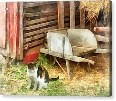 Farm Cat Acrylic Print by Susan Savad