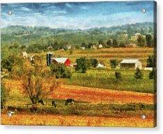 Farm - Cow - Cows Grazing Acrylic Print by Mike Savad