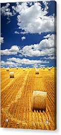 Farm Field With Hay Bales In Saskatchewan Acrylic Print by Elena Elisseeva