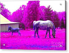 Acrylic Print featuring the photograph Farm Friends - Animals by Susan Carella